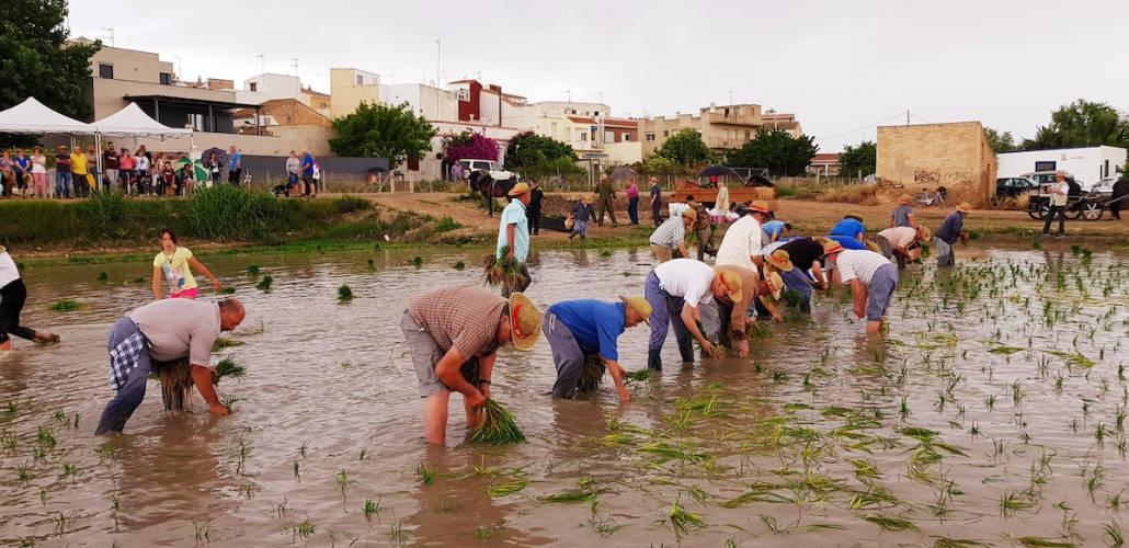 Festa de la Plantada - Foto Ajuntament de Camarles